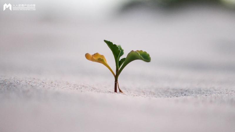产品经理之「种子」挑选和栽培