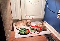 狗吃牛排、猫吃龙虾,1000万人围观的宠物吃播是怎样的生意?