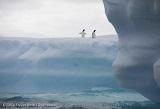 抖音南极直播背后:直播如何改变了信息获取?