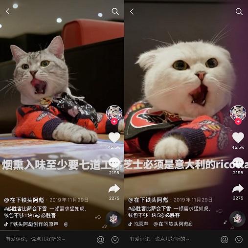 """停更4个月,""""会说话的刘二豆""""回归当天涨粉100万,抖音萌宠视频前景如何?"""